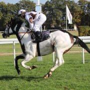 Ort : Koeln Datum : 29.10.2016 Rennen : 4 120 Jahre Koelner Renn-Verein am Ostermontag 2017 Agl.IV (E) - 1.600 m Motiv : Silvery Moon (FR) Reiter : Andreas Suborics Besitzer : Stall Paint Horse Trainer : Mario Hofer Copyright by Klaus-Joerg Tuchel - Siriusweg 16 - 42697 Solingen Telefon ( Fon ) 0049 (0) 212 335925 Fax 0049 (0) 212 2331034 Mobil 0172 256 1954 www.klatuso.com mail@klatuso.com Umsatzsteuer Identifikationsnummer - DE 120923039 Mehrwertsteuersatz 19% Stand 01.01.2007 Bankverbindung : Konto 116806 BLZ 34250000 bei der Stadt-Sparkasse Solingen IBAN : DE76 3425 0000 0000 1168 06 SWIFT-BIC.: SOLSDE33 Bestellnummer : 161029K_04z005